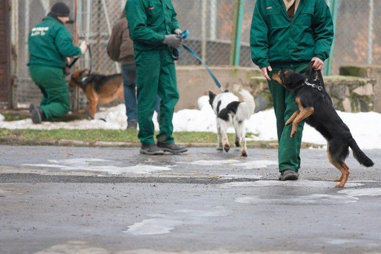 Olsztyn. Pokaz umiejętności psów wyszkolonych przez więźniów.