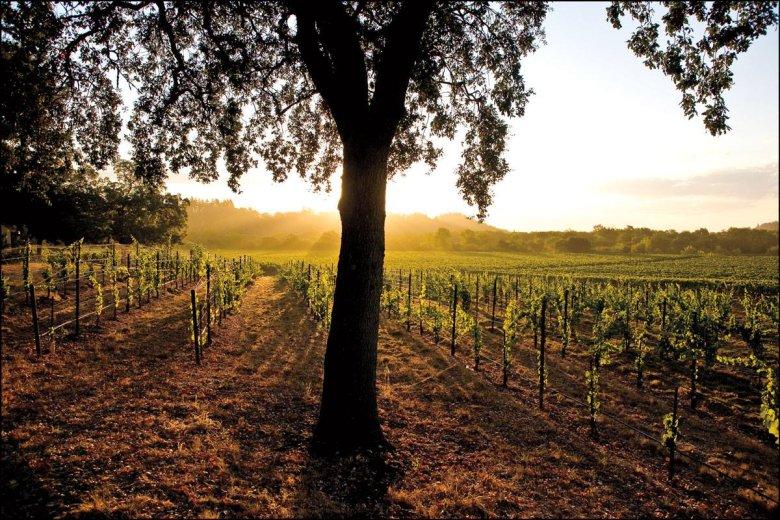 Winnice Kalifornii