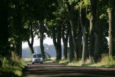 Stare drzewa przy drogach ocieniają drogę i nadają jej wiele uroku. niestety, stanowią też śmiertelne zagrożenie dla kierowców.
