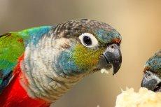 Papuga ostrzegała handlarzy narkotyków przed policją.