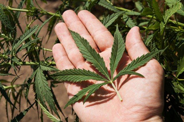 [url=http://www.shutterstock.com/dl2_lim.mhtml?src=jIVeTI5BI7xUf2YY4g_6_A-4-41&id=87054080&size=small_jpg&submit_jpg=]Znany lekarz przeprasza za to, co mówił o marihuanie[/url]
