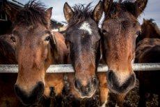 Zoofila w Szwajcarii dotyczy przede wszystkim koni.