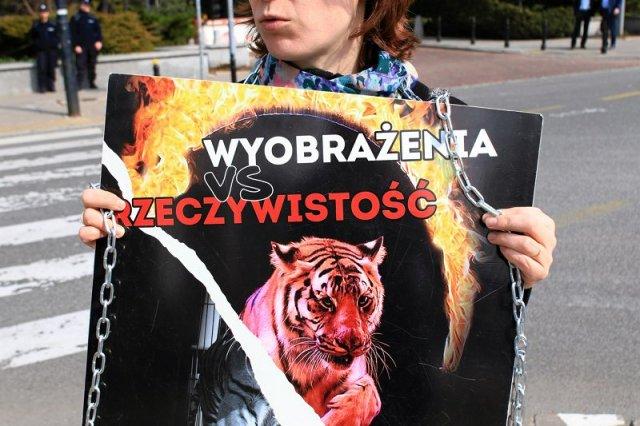 Fundacja Viva protestowała na Wiejskiej w obronie zwierząt cyrkowych. W ubiegłym roku interweniowali w cyrku, który teraz występuje na przykościelnym terenie w Opolu. Odebrali mu wówczas zwierzęta.