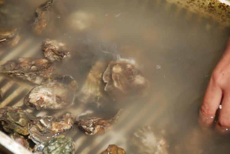 Akurat dwa dni temu byłem na fermie ostryg. Tak właśnie wygląda to co się dzieje z małżami latem. Wypuszczenie gamet do wody, czyli tarło. Małże są pełne mleczu. Zimą gdy są pełne mięsa, smakują dużo lepiej.