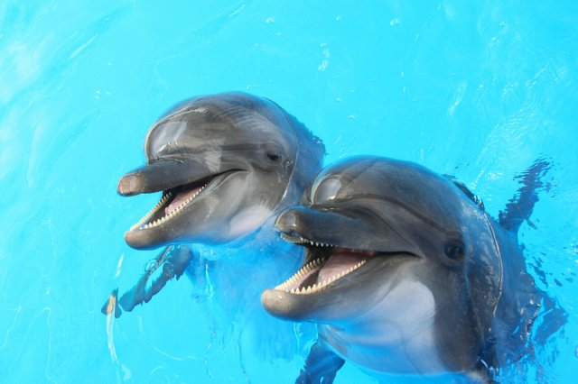 Delfinariów na świecie jest dużo, ale tylko tylko trzy ośrodki z delfinoterapią