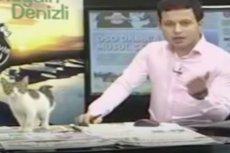 Wejście... kota! Niezwykły gość odwiedził studio pewnej stacji telewizyjnej. Kamery nie speszyły go ani trochę
