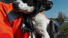 W piątek strażacy wyciągnęli z wylewiska Wisły w miejscowości Nicponia psa z workiem na głowie i wrośniętą obrożą