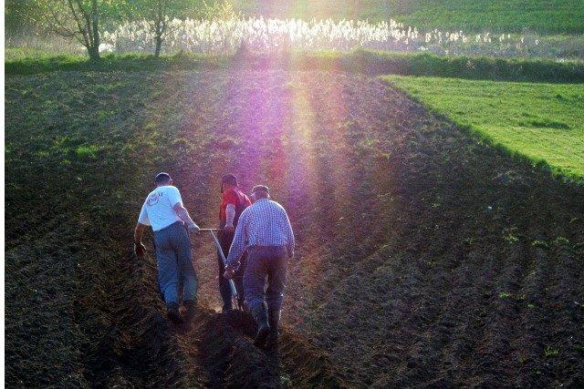 Powrócą chłopi bez własnej  ziemi, za to pracujący na kościelnych polach.
