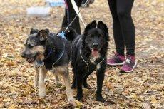Właściciele psów wiedzą, że spacery z psem, to idealny moment, aby poznać kogoś nowego.