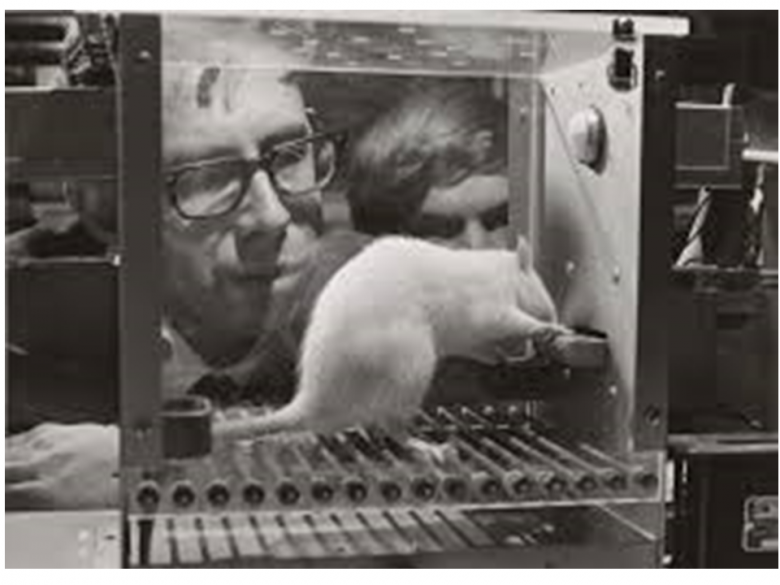 Frank Rosenblatt obserwuje uczącego się szczura.
