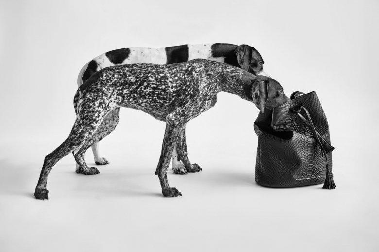 W przepięknej kampanii pre-spring 2016 zamiast modelek pojawiły się...rasowe psy.