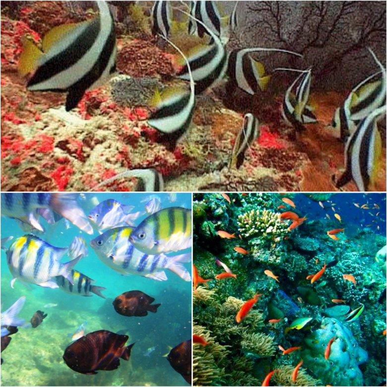 Flora i fauna na rafie w okolicy Ko Mai Phai na Morzu Andamańskim.