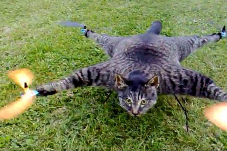 Tak wygląda dron z martwego kota.