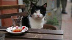 """Kadr z filmu  """"Kedi – sekretne życie kotów"""""""