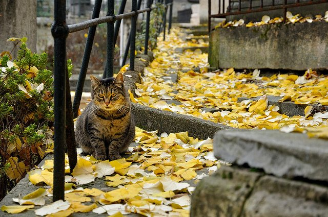 Montmartre. Zdjęcie: Panchoa