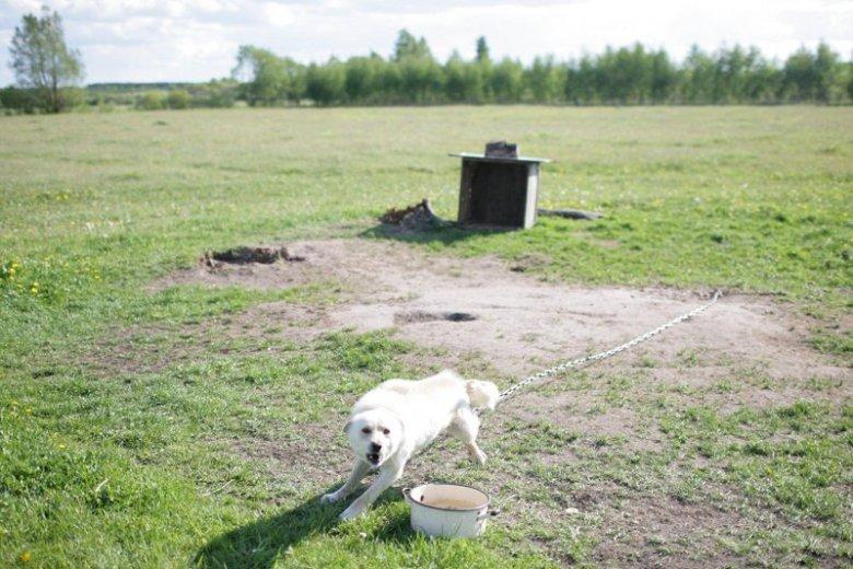 Platforma chce zakazać trzymania psów na łańcuchach