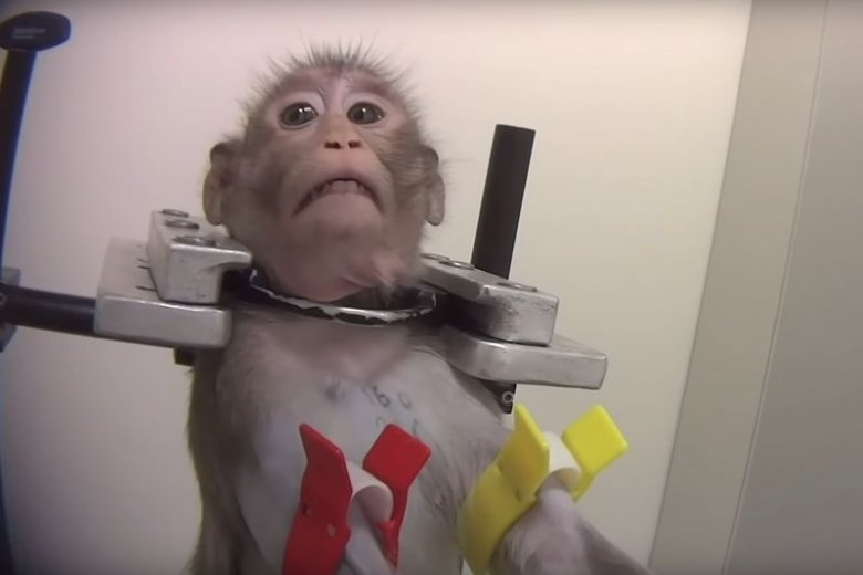 Zwierzętom podawano różne leki oraz chemikalia.