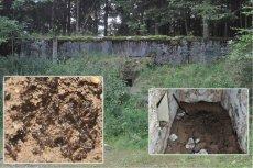 Mrówki musiały jeść trupy towarzyszy - inaczej nie przetrwałyby w surowych warunkach opuszczonego bunkra