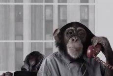 Screen z nowego spotu PiS, który ma ośmieszyć konwencję Koalicji Obywatelskiej.