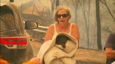 Australijka ratuje poparzoną koalę z płomieni