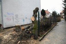 Polskie drzewa masowo padają – tak działa Prawo i Sprawiedliwość