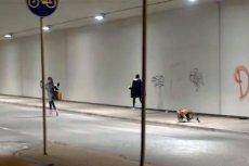 """Mutant giant spider dog is back"" - oznajmił na YouTube SA Wardęga!"
