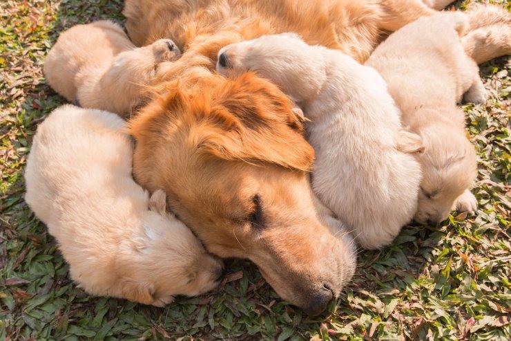 Od psich mam możemy się uczyć jak mądrze wychowywać i mądrze kochać.