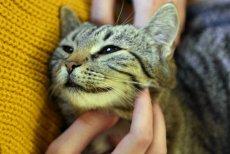 Zdjęcie z otwarcia kociej kawiarni w Zielonej Górze (14.02.2020). Kawa (i jej ziarna) to jeden z produktów, których nie należy podawać kotu. Czego jeszcze nie może jeść kot?