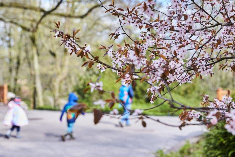 Wszystko wskazuje na to, że wiosna przyjdzie już niedługo.