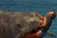 Nawet bez rekina woda może być zabójcza!