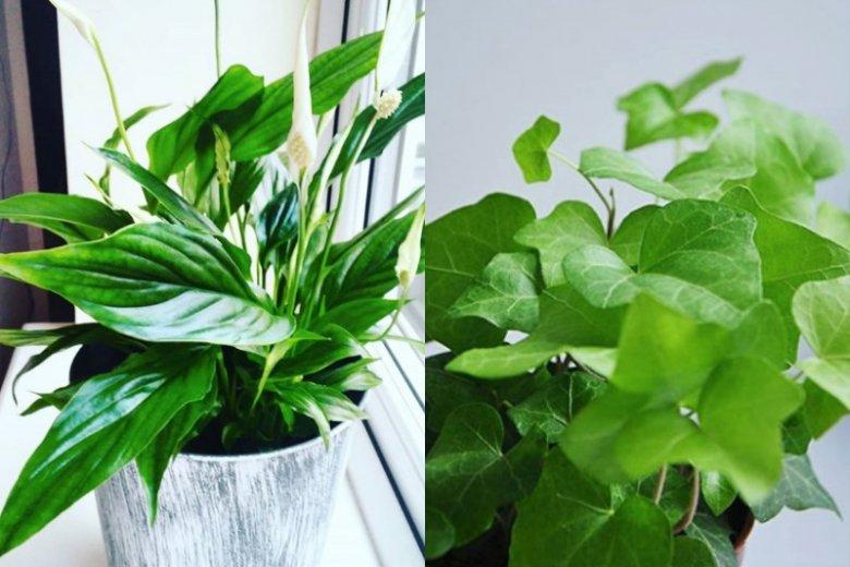 Rośliny, które oczyszczą powietrze