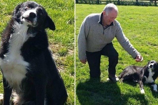 Pies Pero niczym Lassie - pokonał 368 km by wrócić do swojego pana.