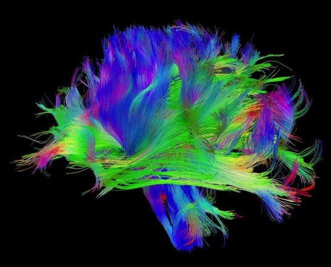 Mapa połączeń między neuronami w mózgu
