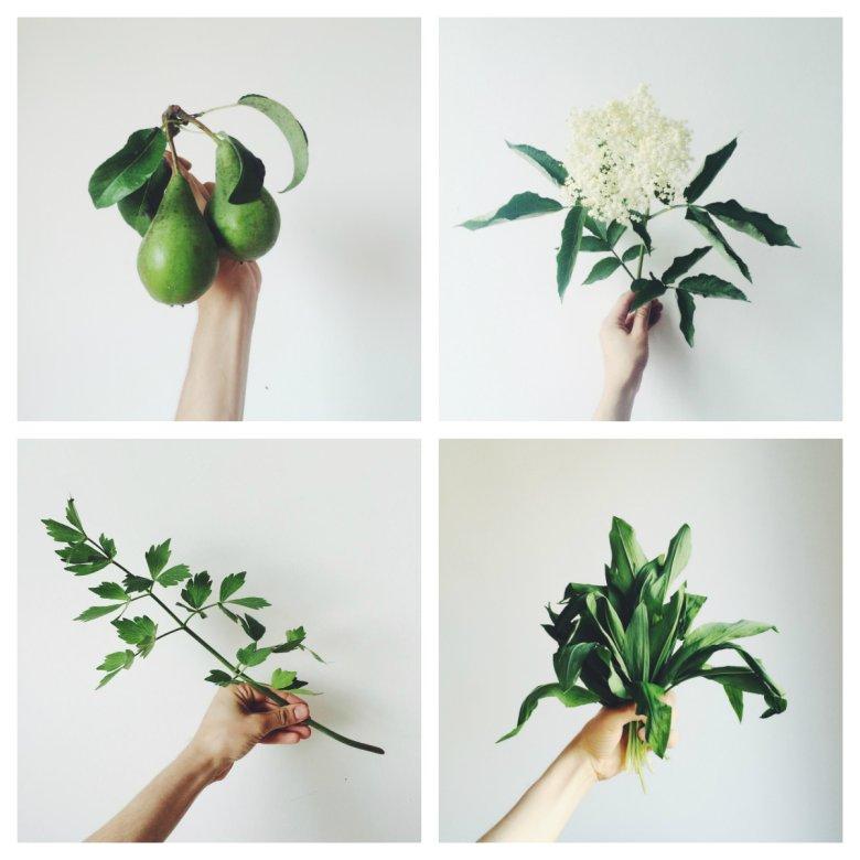 Strona Roślinne Porady to minimalistyczne, malarskie zdjęcia i praktyczne zalecenia dla miłośników upraw.