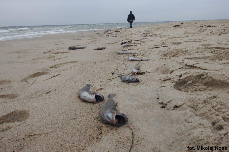 Motele zostały znalezione na plaży.