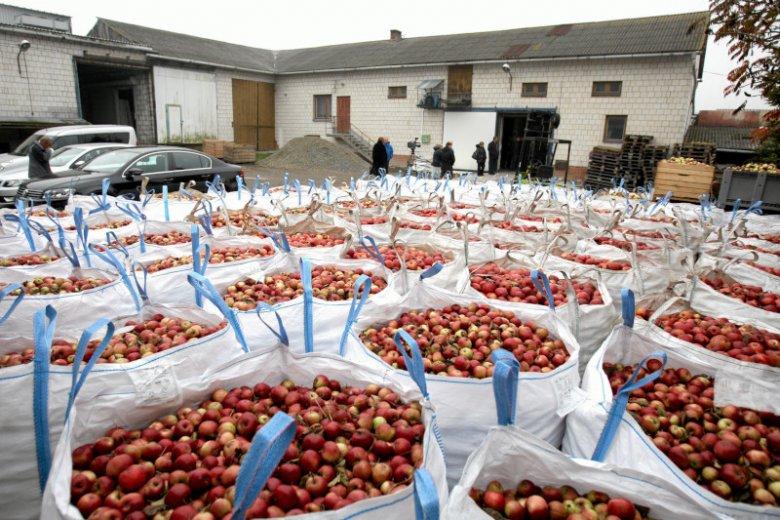 Sadownicy mają ogromny problem z jabłkami.