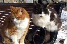 Za zabijanie kotów Wojciech L. został skazany na rok bezwzględnego pozbawienia wolności