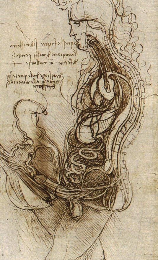 Leonardo Da Vinci, stosunek seksualny