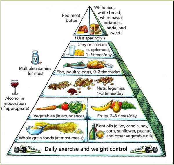 Piramida żywieniowa Willetta