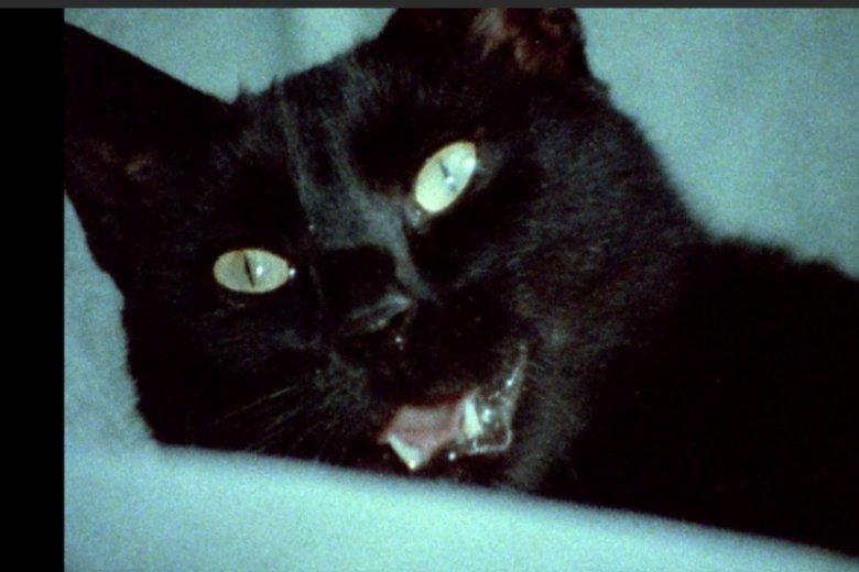 Gwizda serialu - kot Rademenes. Głosu zwierzakowi użyczył Maciej Zembaty