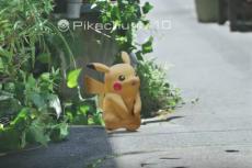 Będziesz mógł naprawdę łapać Pokemony