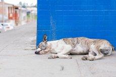 Psy w Norwegii chorują na tajemniczą chorobę, wielu z nich nie przeżywa