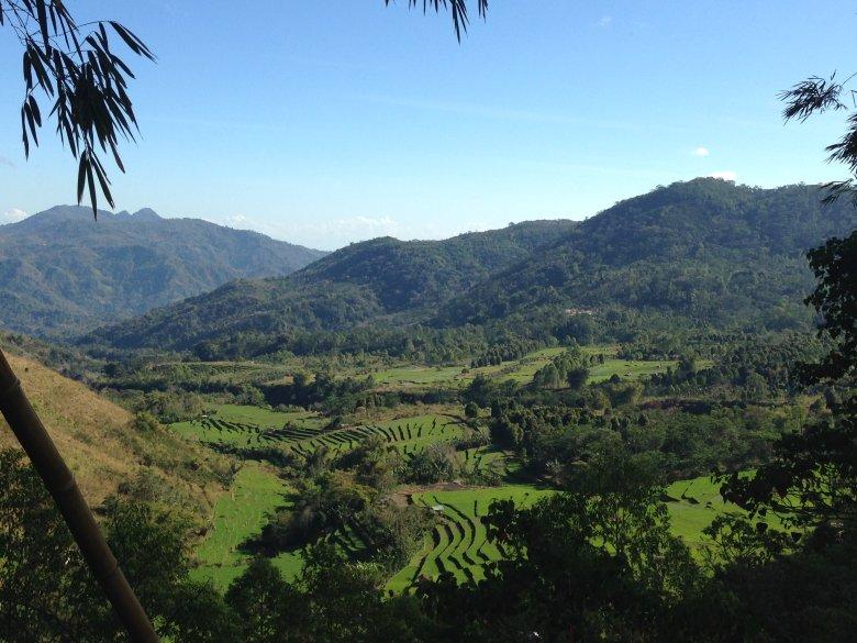 Tarasowo położone pola ryżowe.  Flores, Indonezja.