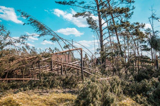 Antoni Macierewicz zadbał o wizerunek wojska. Okazuje się, że wyciąganie drzew przez żołnierzy nie idzie tak jak powinno.
