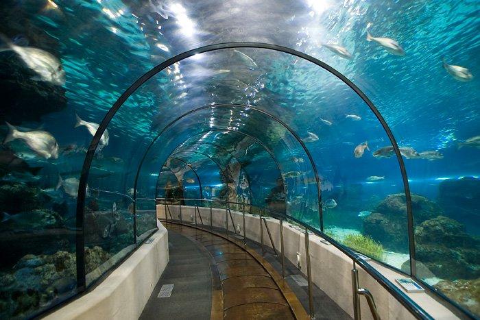 Tunel w barcelońskim oceanarium