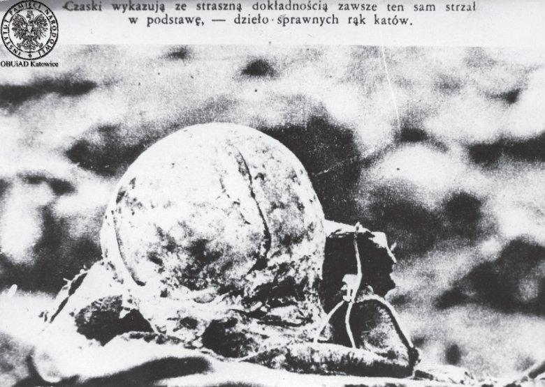 Jedna z czaszek znalezionych na miejscu zbrodni katyńskiej. Widać ślady od strzału w potylicę.