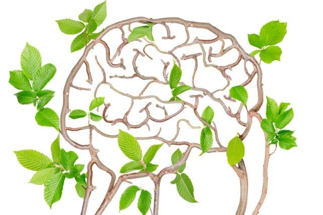 Rośliny potrafią oszacować ryzyko i podejmować decyzje - wynika z najnowszego badania przeprowadzonego przez brytyjskich i izraelskich naukowców