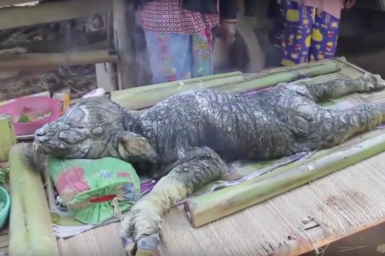 Hybryda bawoła i krokodyla przeraża. Miejscowi wierzą, że przyniesie im szczęście.