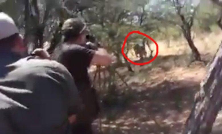 Moment ataku, a raczej samoobrony lwa.