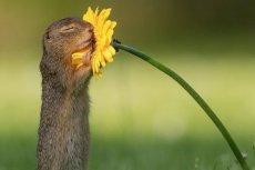 Zdjęcie wiewiórki wąchającej kwiatek stało się najpopularniejszą fotografią na świecie.